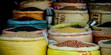 Investigación chilena demuestra que el uso de ciertos alimentos previene el alzheimer